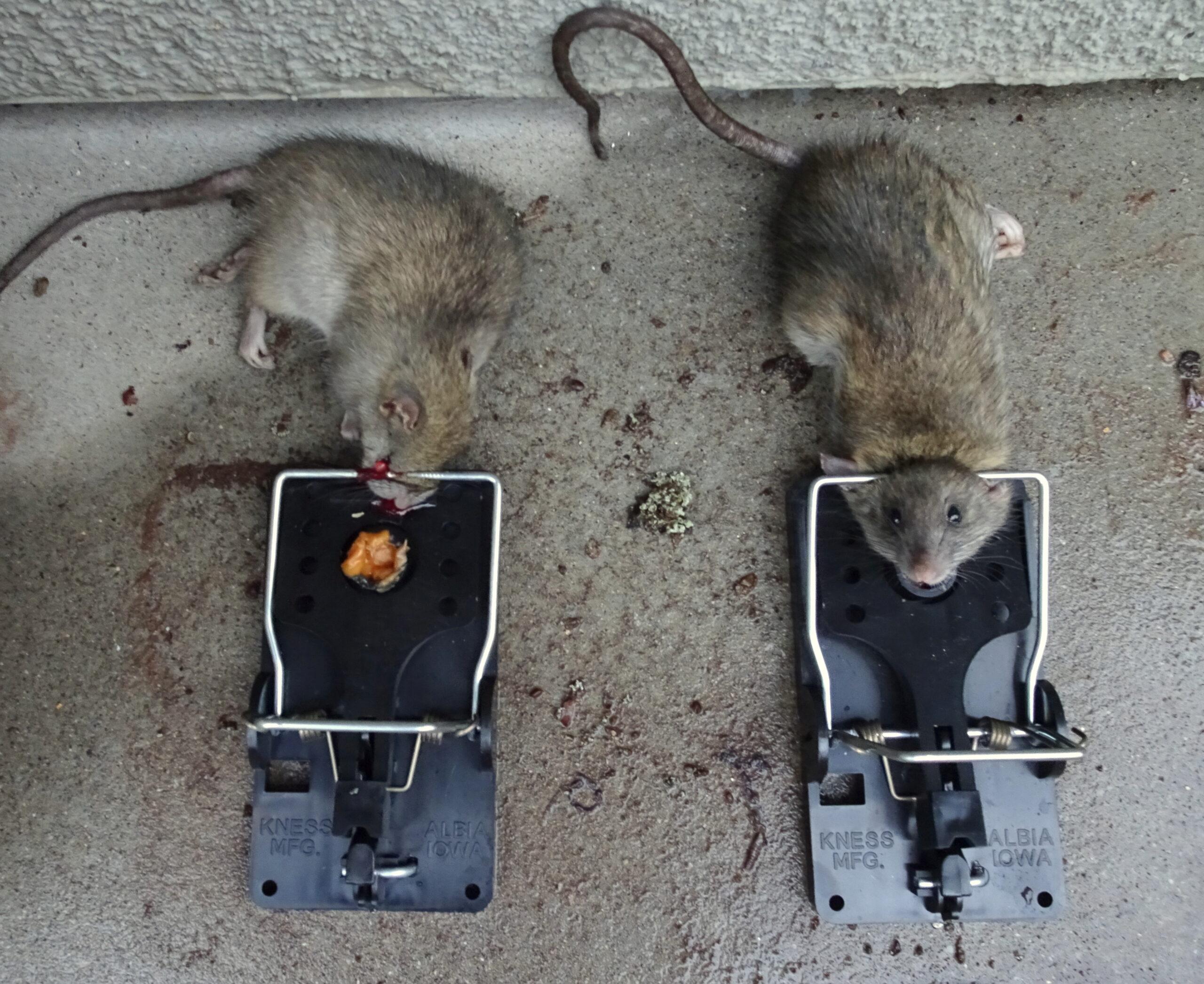 rat_control